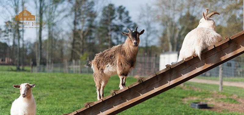 Scottsdale Farms Animals