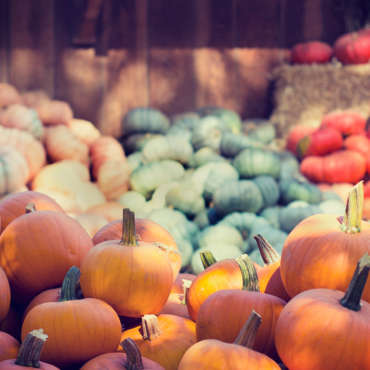 Pumpkin Patch is open daily!