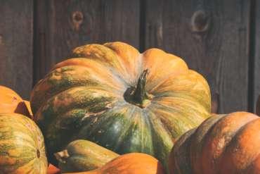 Pumpkin Patch is Open!