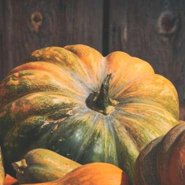 Pumpkin Patch Coming soon!