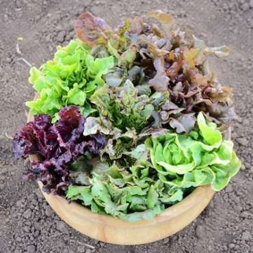 Planting Fall Vegetables