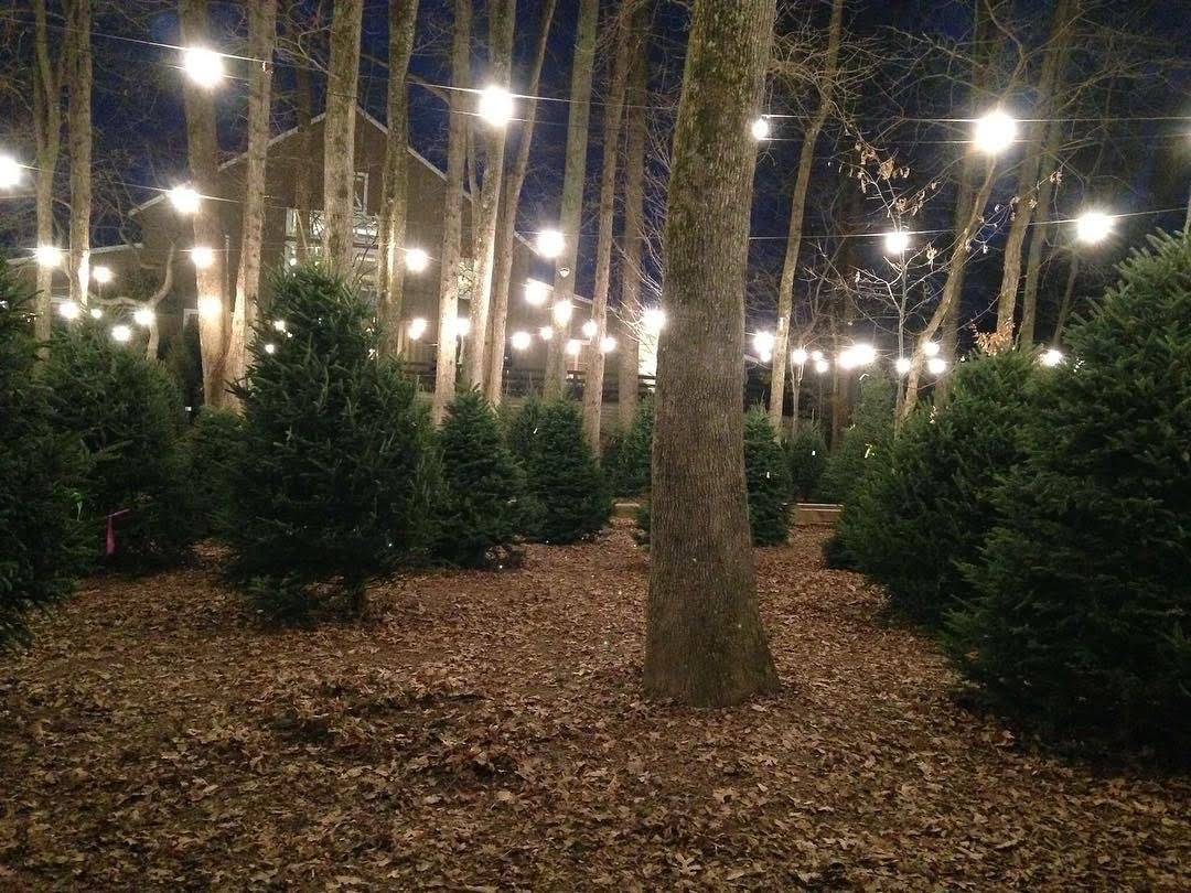 Christmas Trees At Scottsdale Farms