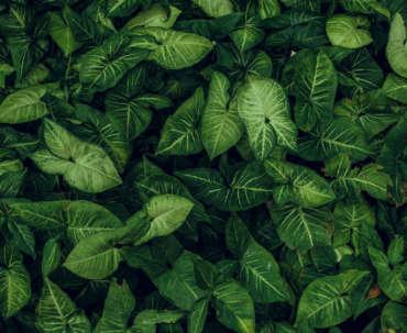 Plant Inventory List
