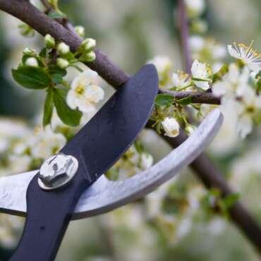 Pruning for Spring Seminar